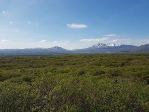 Wald NP